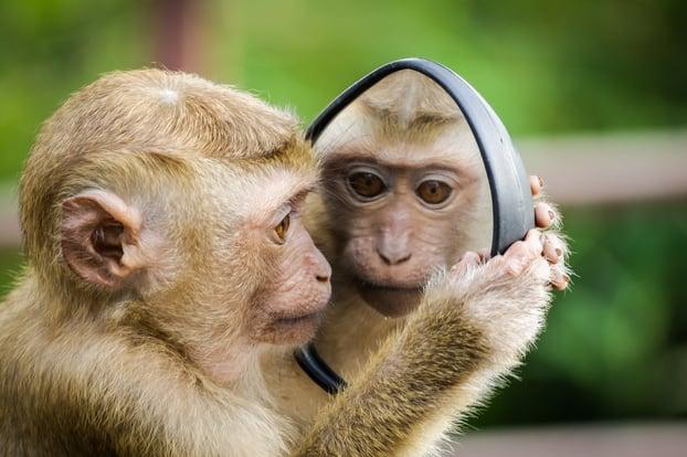 closeup-photo-of-primate-1207875